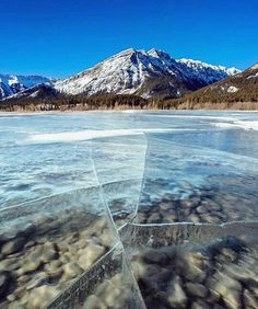 """""""Follow @wow_planet for more amazing travel/nature posts  Bubbles at Nordegg, Abraham Lake, Alberta  Photograph By @stevint"""""""