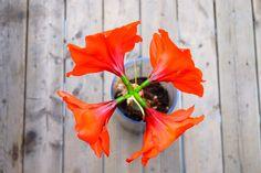 1-Life-Of-Pix-Free-Stock-Photo-wood-nature-flower