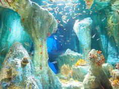 池袋サンシャインシティの中にある、サンシャイン水族館は2011年にリニューアルオープン。「天空のオアシス」をコンセプトに南国のリゾートをイメージし、都心にいることを忘れてしまうような癒しの空間に生まれ変わりました。大人が楽しめる水族館をテーマに作られた為、他の水族館にはない魅力的な仕掛けがたくさんあります。大人のためのお勧めの5つのスポットをご紹介しましょう!