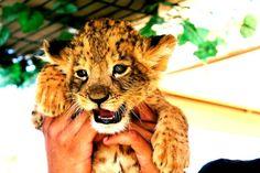 What a Cutie <3