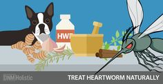 You can skip toxic and severe conventional heartworm treatment with the help of a holistic vet and these 5 natural alternatives.