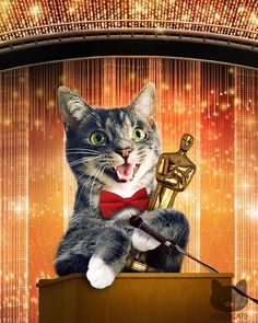 Drumroll please! The winner for best  actress in a starring role is:  @pebblesthekitty!!!   For a chance to be Hussified, follow @HussyCats on Instagram & use #HussyCats to submit your photos!