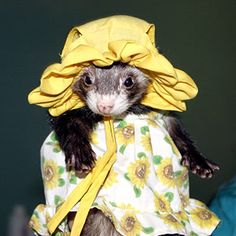 Outrageous Halloween Costumes for Pets: Sunflower Ferret (via Parents.com)