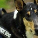 #Oversight Subcommittee Holds Hearings to Examine VA Service Dog Program - Washington Free Beacon: Washington Free Beacon Oversight…