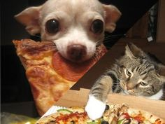 Funny cat video - Funny dog video - Cats vs Dogs Stealing Pizza Compilation
