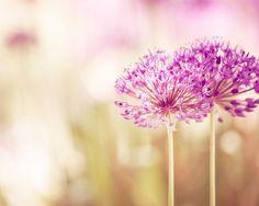 Flower Photography  pink decor spring floral by CarolynCochrane, $30.00