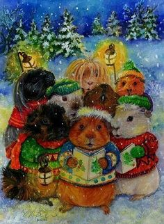 Guinea Pigs at Christmas