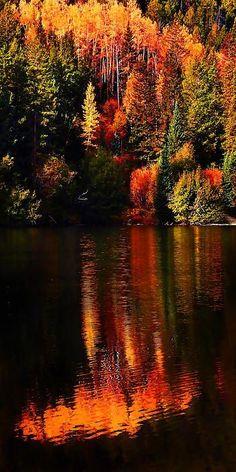 Lakeshore Reflections – Cottonwood Lake, Buena Vista, Colorado