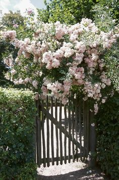 Outstanding Climbing Roses