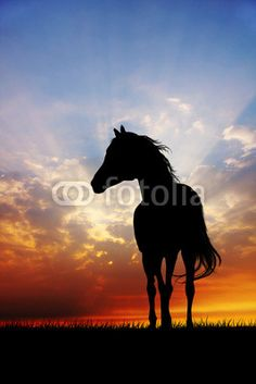 horse wallmural