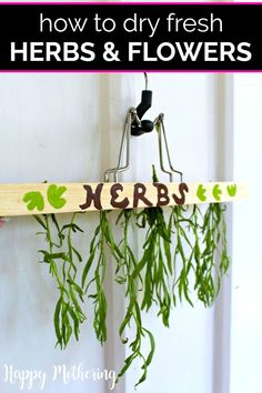 Learn how to dry herbs from your garden indoors or outdoors with this easy DIY Hanging Herb Dryer. Enjoy natural dried herbs from your gardening haul all year without a dehydrator or oven. Works for flowers too! Hanging Herbs, Diy Hanging, Hanging Planters, Hanger Crafts, Diy Crafts, Upcycled Crafts, How To Propagate Lavender, Herbs For Health, Health Tips