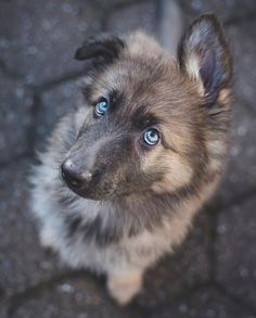 Awww who could say no to those little pups eyes awww