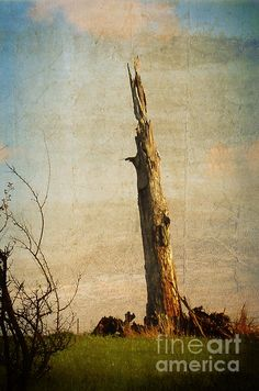 A stark reminder of what once stood proudly. Totem by Mary Machare. #wallart #artforsale