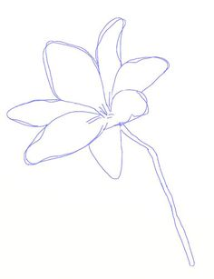 how to draw a lily flower step 4