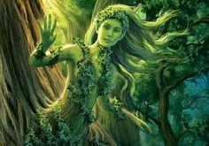 Dentro de cada árvore mora um espírito protetor, que tem a forma de uma linda mulher. São as dríades da floresta.
