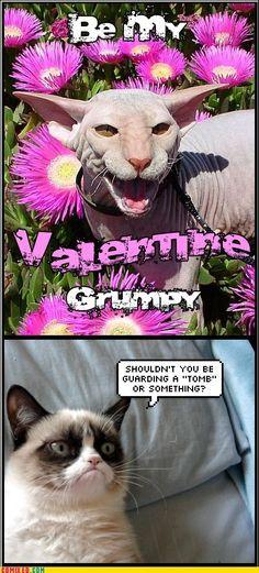Don't Think Grumpy Cat is Impressed!   Be My Valentine?   @Melissa Evertson