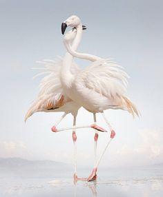 Dancing flamingos - http://topinspired.com/top-10-animal-portraits/