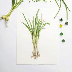Botany, Plant Hanger, Biology, Illustrations, Watercolor, Spring, Plants, Home Decor, Pen And Wash