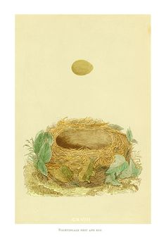 Morris nest pictures | Fine art print by Morris of a Nightingale nest and egg
