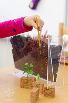 Hands-on Science Experiments for Kids: Have you ever wondered how deep you should plant a seed to get the best growth? In this experiment, you can use a root viewer to watch seeds grow, make predictions and collect data. Plant Experiments, Plant Science, Science Experiments Kids, Science Lessons, Science For Kids, Science Activities, Science Ideas, Life Science, Science Fun