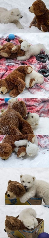 Ein Eisbärjunges und sein Teddy