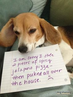 poor little beagle, bad tummy but that is what a beagle does, they eat everything