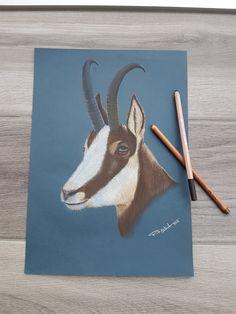 """""""L'intrépide"""" Chamois portrait pastel pencils on paper by Rud'art C … Crayons Pastel, Pastel Pencils, Portraits Pastel, Chamois, Moose Art, Creations, Paper"""