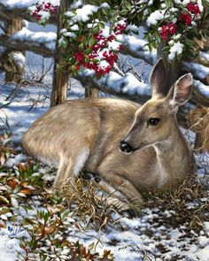 Sweet Visitor by Dona Gelsinger ~ Christmas ~ deer ~ winter