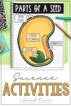 Take the stress out of planning your science class with these low-prep worksheets and activities! Your students will love learning about parts of a seed. Parts Of A Seed, Parts Of A Plant, Vocabulary Word Walls, Vocabulary Cards, Science Resources, Science Activities, How Plants Grow, Second Grade Science, Reading Passages