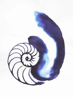cosima's fibonacci nautilus