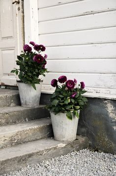 Gardening With Containers Nice idea; Planning on trying again next year. Garden Gates, Garden Tools, Small Gardens, Outdoor Gardens, Growing Dahlias, Garden Planters, Garden Planning, Potted Plants, Garden Inspiration