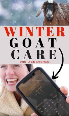 Winter goat care is possible and raising goats in really cold, negative weather is possible. You just have to make a plan to prepare your goats and barns for the really cold weather. Learn how to do that here! Keeping Goats, Raising Goats, Goat Shelter, Happy Goat, Nigerian Dwarf Goats, Farms Living, Homestead Living, Emergency Care, Nubian Goat