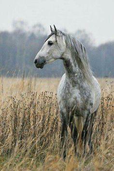 grey horse/grey morning