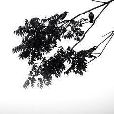 Seref Ozen @serefozen Instagram photos | Websta (Webstagram)