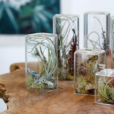 """Cube Aerium $75, These little Aeriums have a """"ship in a bottle"""" appeal. Tiny mosses, lichens, and tillandsias (air plants) live happily together under glass.  I sooo want a set of these!!"""