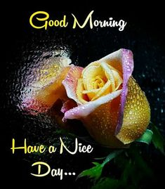 Good Morning Flowers Pictures, Good Morning Friends Images, Good Night Flowers, Good Morning Beautiful Flowers, Beautiful Morning Messages, Good Morning Beautiful Images, Morning Pictures, Good Morning Wednesday, Good Morning Gif