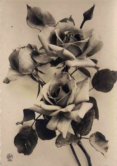 Supreme Portrait Drawing with Charcoal Ideas. Prodigious Portrait Drawing with Charcoal Ideas. Rose Reference, Henne Tattoo, Schrift Tattoos, Rosen Tattoos, Desenho Tattoo, Plant Drawing, Beautiful Roses, Flower Tattoos, Sketches