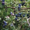 To protect your garden and your fruit trees from pests, a solid defense is a good fence. Garden netting is an easy-to-use barrier — ideal for organic gardening. Bird Netting, Garden Netting, Thornless Blackberries, Blackberry Plants, Bird Tree, Fruit Trees, Bird Feeders, Organic Gardening, Garden Sculpture