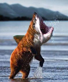 Funny Animal Photo Bomb Picture Machu Stock Photo (Edit ... |Hilarious Animal Edits