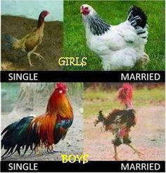 Hen And Rooster - After Marriage by - A Member of the Internet's Largest Humor Community Funny Mom Quotes, Funny Jokes, Hilarious, Teen Quotes, Funny Laugh, Jokes Quotes, Really Funny, Funny Cute, Super Funny