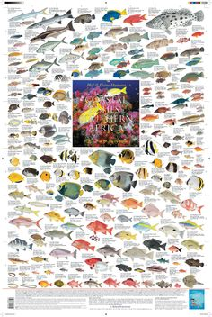 """""""Coastal Fishes of Southern Africa - 3: Coral & Rocky Reefs""""    (2010 Korck Publishing, artwork by Elaine Heemstra from the book, """"Coastal Fishes of Southern Africa"""")"""