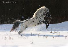 nice picture...Фалабелла - фотографии - Equestrian.Ru, конное обозрение / Лошади и конный спорт