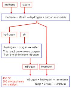 How nitrogen compounds are passed on by animals eating plants how nitrogen compounds are passed on by animals eating plants nitrogen pinterest secondary schools ccuart Image collections
