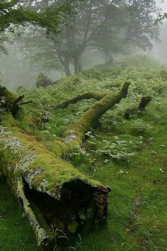 misty morning in the woods