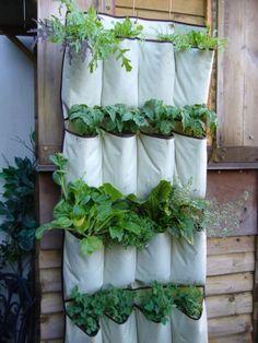 Hanging pocket shoe store into vertical vegetables garden | Creative Spotting
