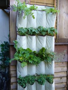 Hanging pocket shoe store into vertical vegetables garden