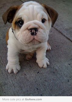 Don't you just want to sqeeze those little wrinkly cheeks!?
