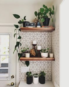 pilea peperomioides houseplants indoor plants plants decor home decor interior style plant corner nordic style scandinav Interior Decorating, Interior Design, Home And Deco, Home Living, Home Decor Inspiration, Home Kitchens, Kitchen Decor, Plants In Kitchen, Kitchen Nook