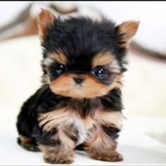 My future puppy..i want to eat him omg!