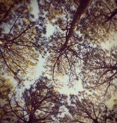 #tree #nature